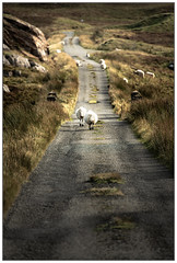 The Long and Woolly Road