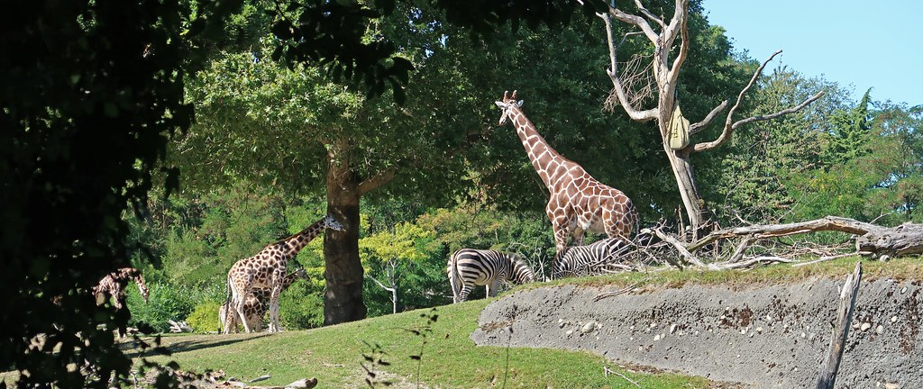 Woodland Park Zoo in Seattle, WA