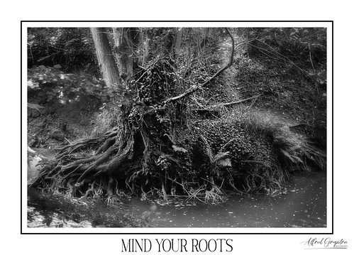 Mind Your Roots