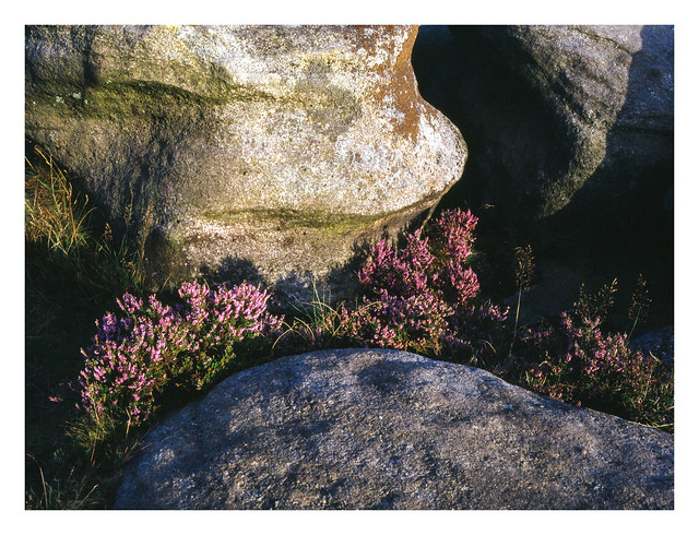 Heather and boulders