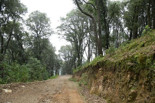 El Presidente Salvador Zamora Asistió a la Liberación de Diversos Animales de Silvestres en el Cerro Viejo
