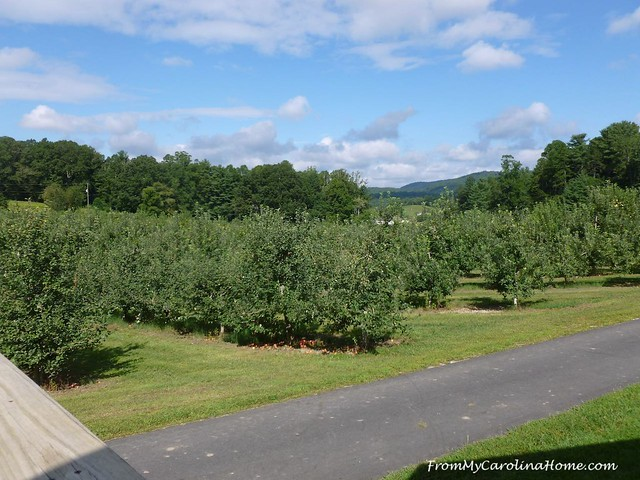 Apple Orchards at FromMyCarolinaHome.com