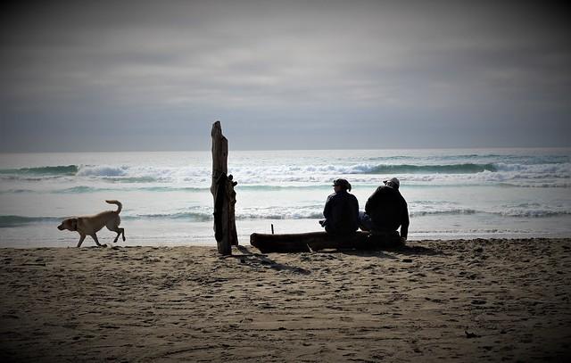 Seaside Dog Beach