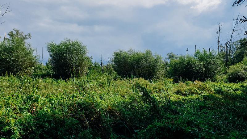 Natuurreservaat Wellemeersen, Welle