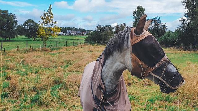 paard met vliegenkap