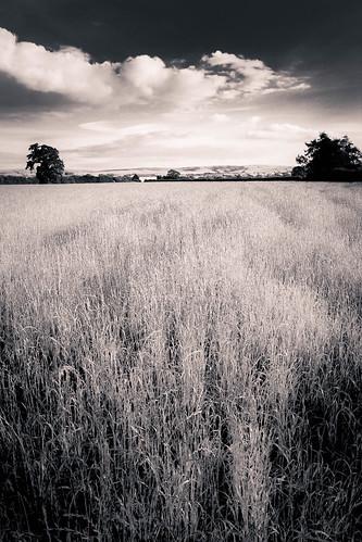 kirkby lonsdale whittington field harvest grass 550d 1022mm wide angle mono black white