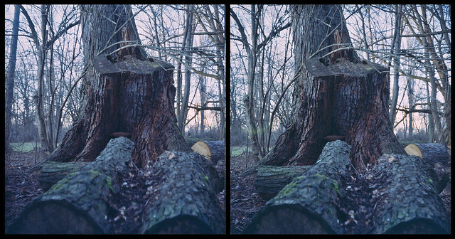 Stereo Realist - Trunks/Logs in a park