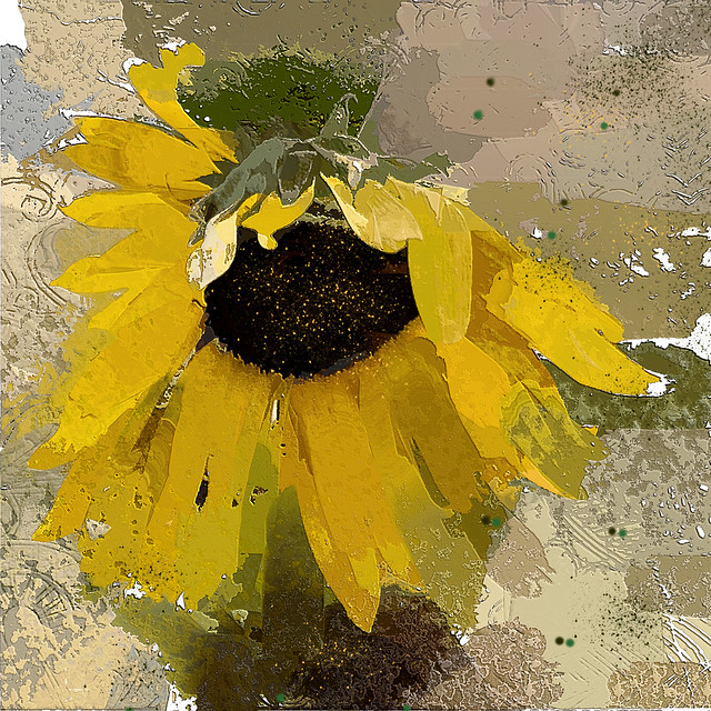 Sunflower series.