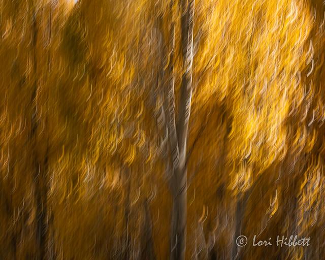 Fall Abstract II