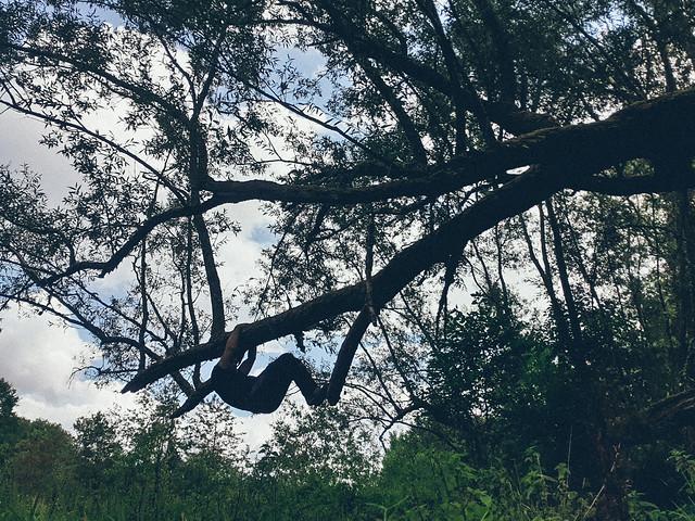 aan boom