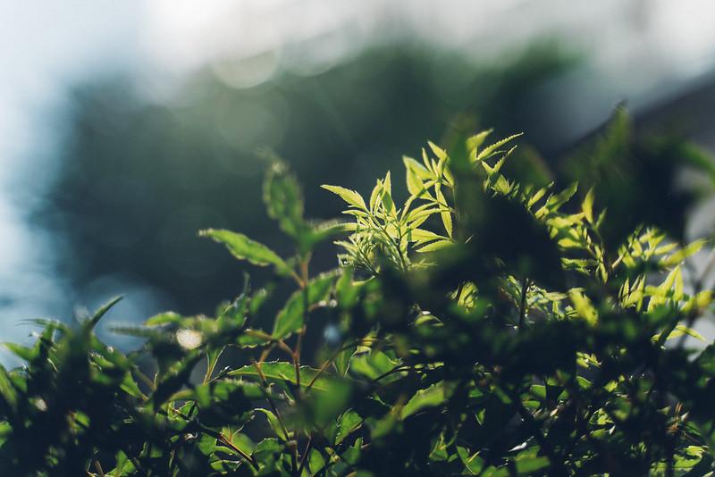 Sunlight|Tamron A036