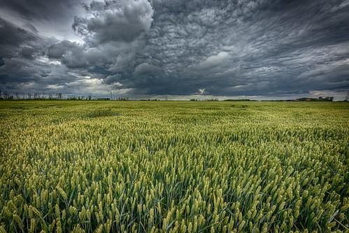 noordwaard clouds sky cloudscape contrast cornfield hdr landscape land netherlands nederland outdoors outdoor panorama sony thenetherlands ultrawide wimvandem