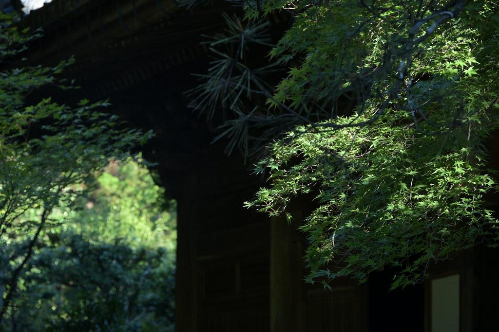洛北蓮華寺