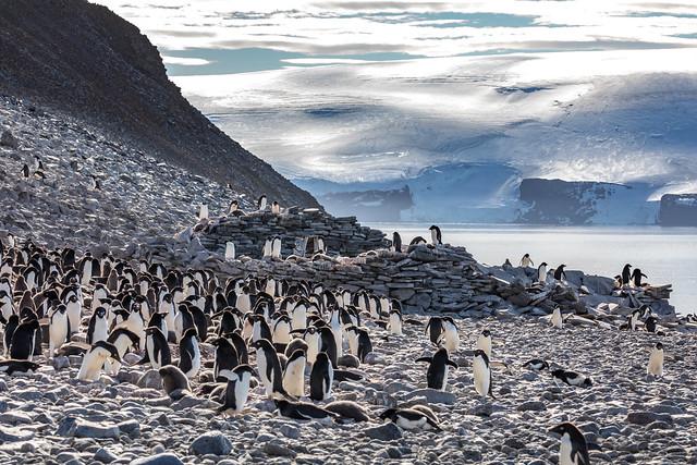 Remains of survivor's hut in Antarctica (read inside)