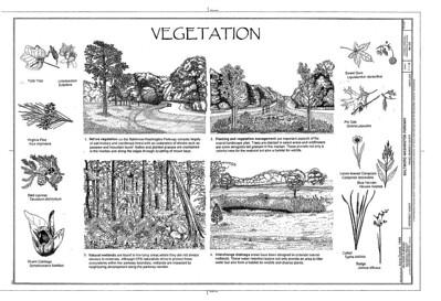 Parkway urban design, Vegetation, Baltimore-Washington Parkway, drawing, Historic American Engineering Record