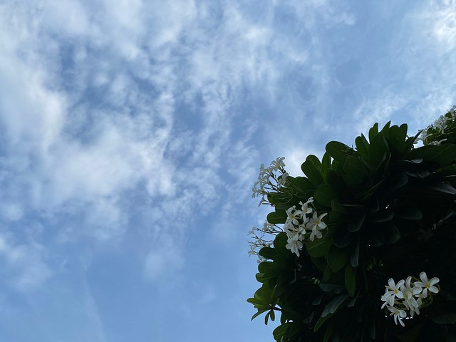 City Nature - Corona Sky, Sunder Nursery