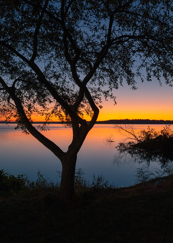 sunrise nature tree lake morning vertical background wallpaper madison wisconsin olinpark canoneos5dmarkiv sigma35mmf14dghsmart nopeople outdoors outside