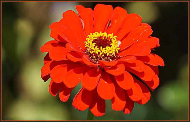 💖🌿🍄🌺👄🌺🍄🌿💖 Ein Blumengruß zum Wochenend ...