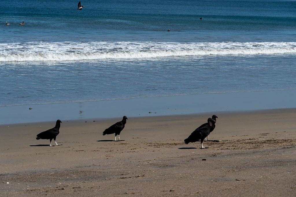 Bad Boys On The Beach