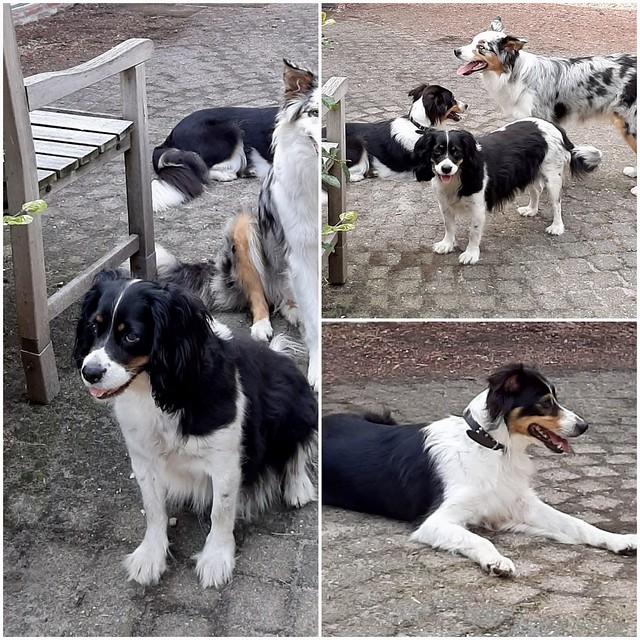 zwart witte pup
