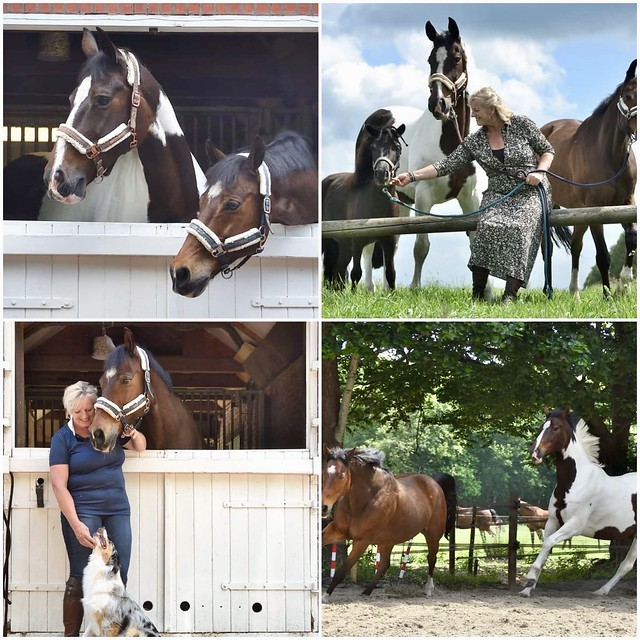 Paarden van Ineke Holstein