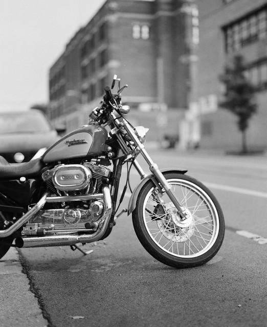 Harley portrait