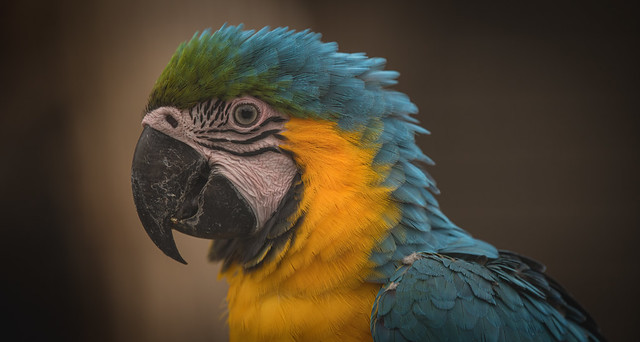 Michael the Macaw.