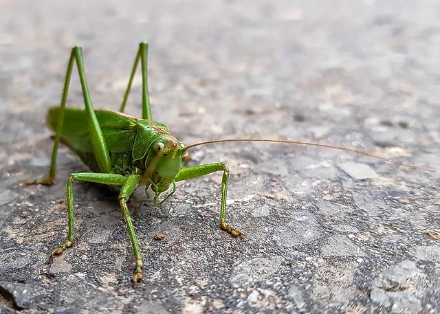 Insekten-192125-20200903.jpg