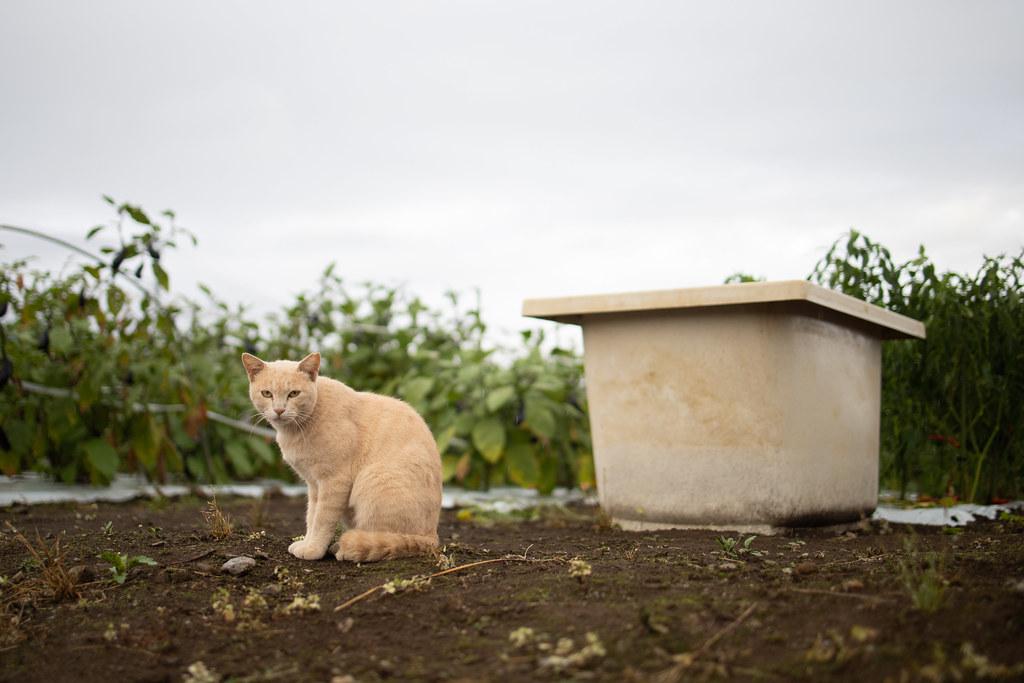 猫 2020/09/06 _MG_2698