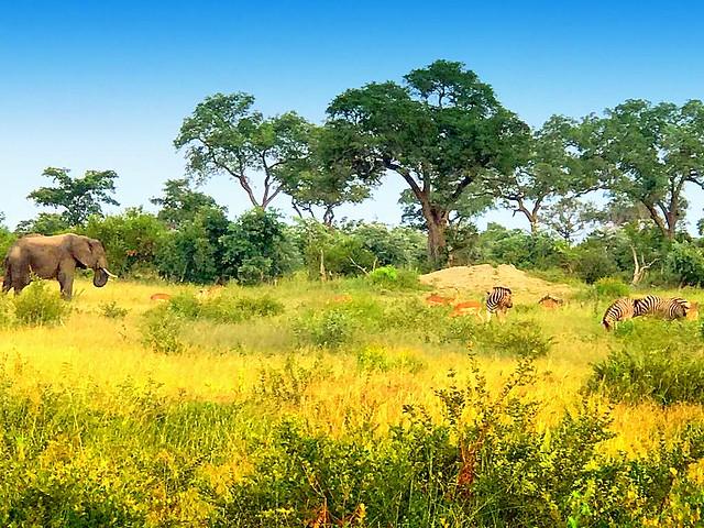 Fairy Tale Grassland