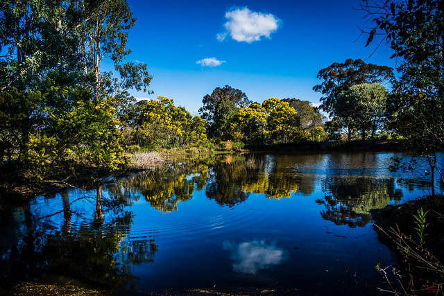 Mt Annan Botanical Garden Lake reflection