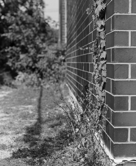 Brick and Vegetation