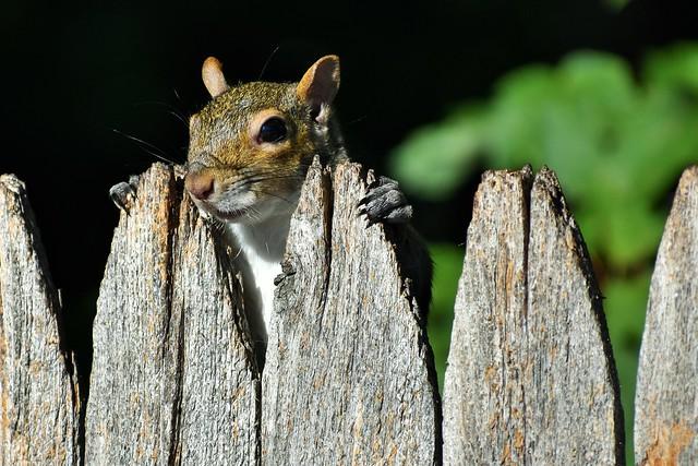 Got nuts #1