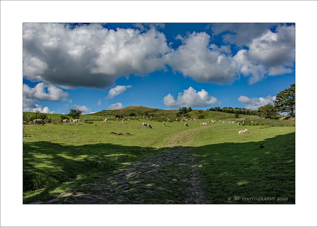 Rivington Sheep Farm