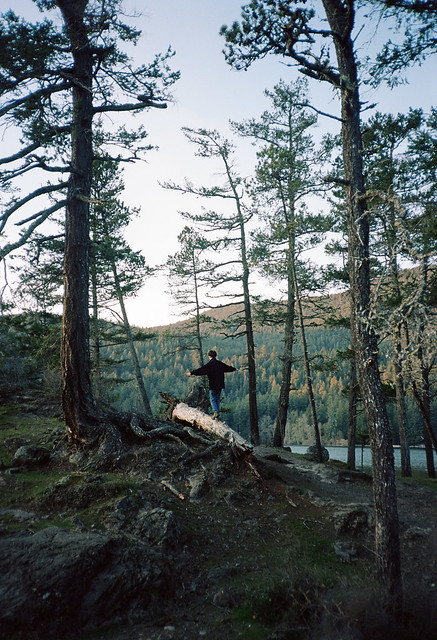 Zofie's Adventure Through the Woods