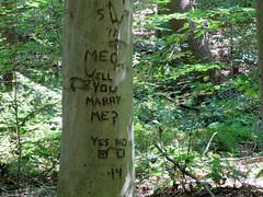 tree proposal