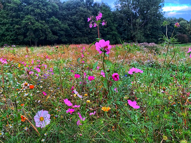A meadow       -      Burnley district