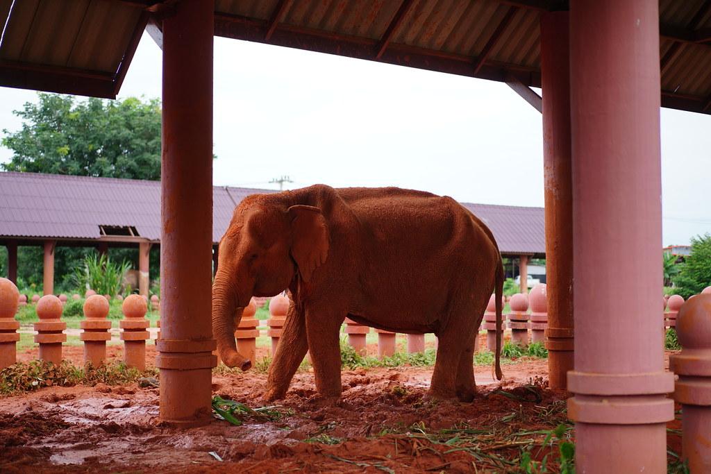 โรงฝึกช้าง - โครงการโลกของช้าง