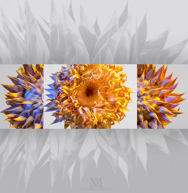 sunny flower collage