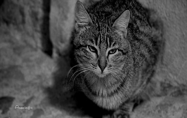 06_A stray cat