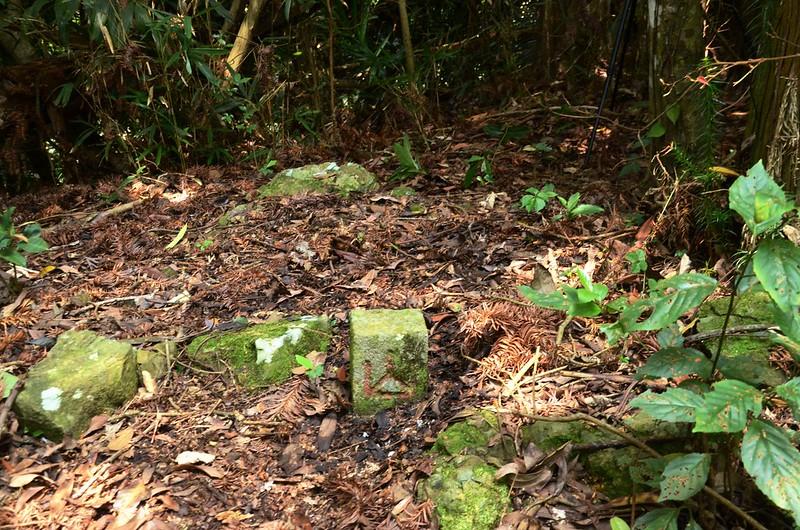南橫龍山冠字補近(06)山字森林三角點(Elev. 1030 m) (2)