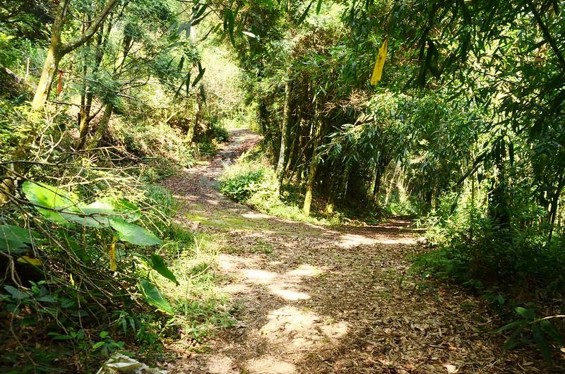 水泥農路岔路