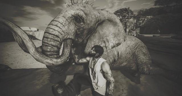 ..:::  Elephant :::..