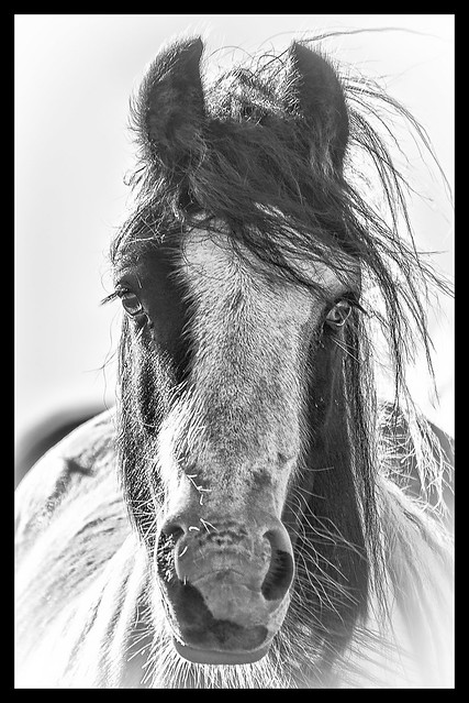 Why the long face...? (In
