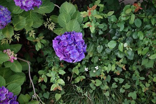 flowers 25