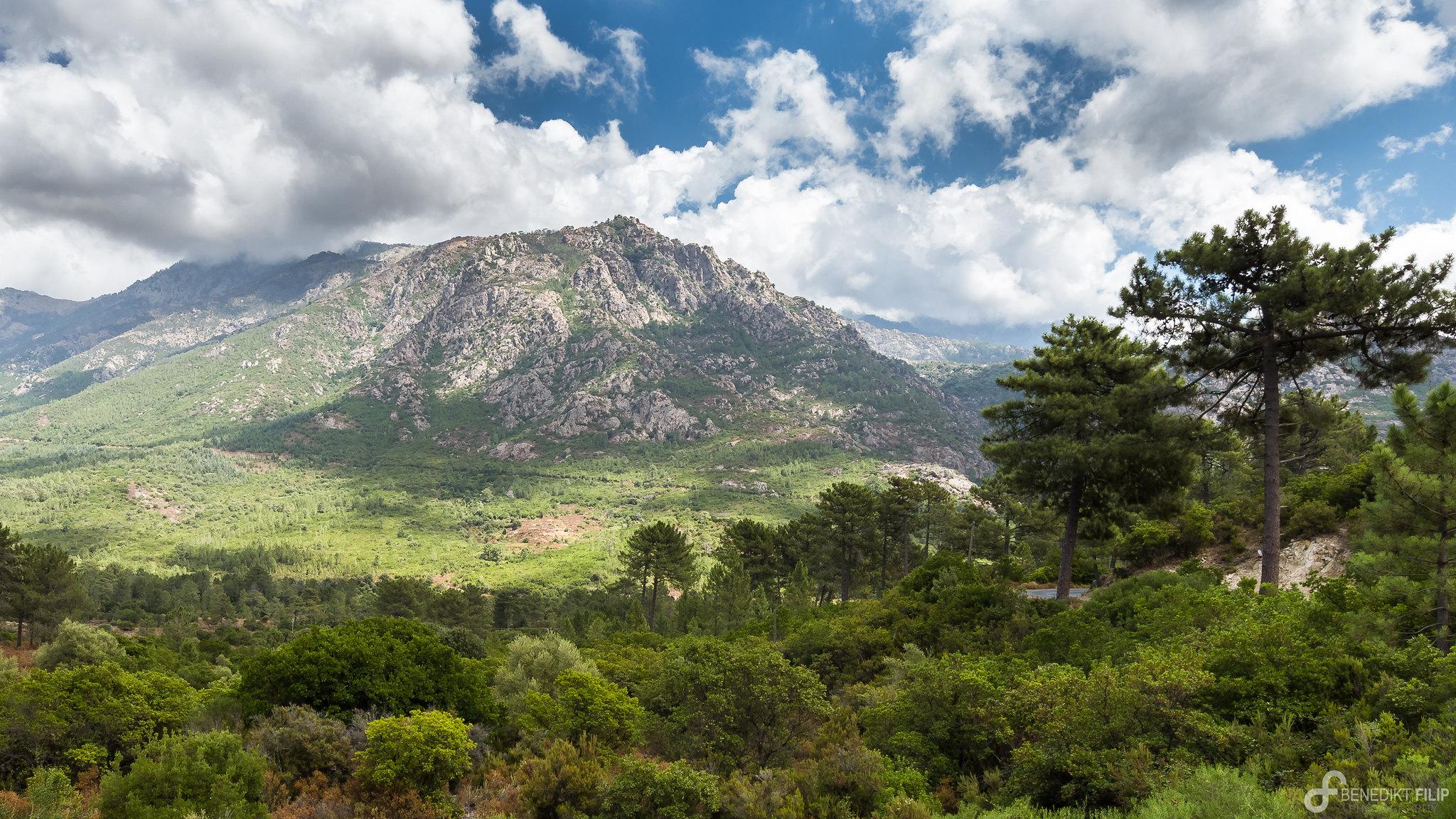 Bonifatu Forest Corsica