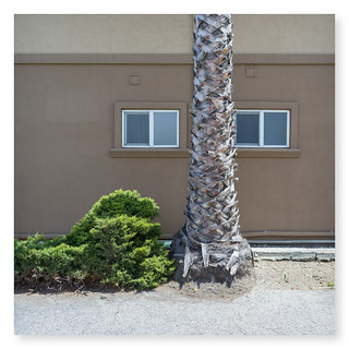 Palm Tree & Shrub by Hotel Windows | by Godfrey DiGiorgi