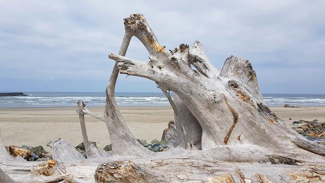 Driftwood at Bullards Beach at Bullards Beach SP, OR