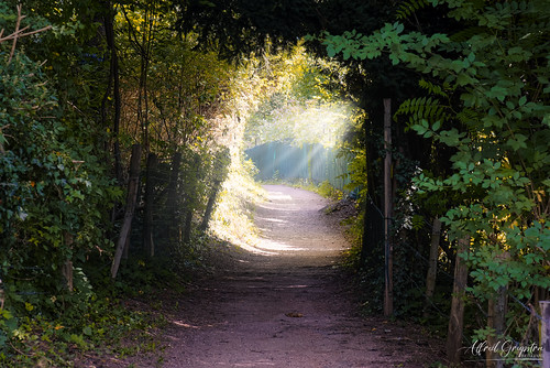 Light On Your Path