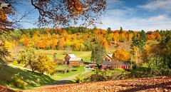 Pomfret, Vermont Fall Foliage 2019